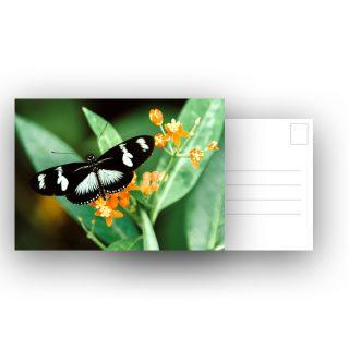 Ansichtkaart vlinder